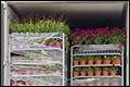 FNV fluit bloementransporteurs terug vanwege verblijfskostenvergoeding