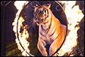 Kabinet verbiedt wilde dieren in het circus