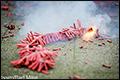 'Ook ouderen genieten van vuurwerk'
