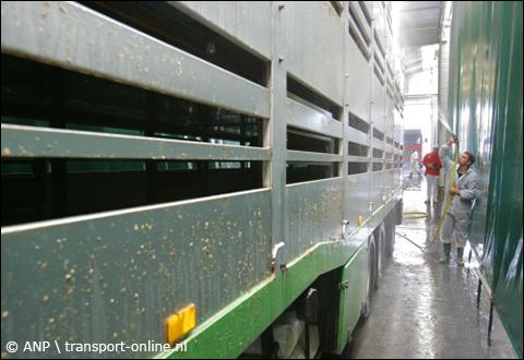 Dierenbescherming: 'Stop lange kalvertransporten'