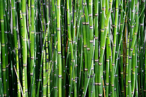 Proef met geluidsscherm van levend bamboe