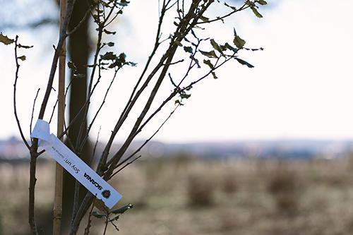 Scania op BedrijfsautoRAI: Voor elke foto een boom