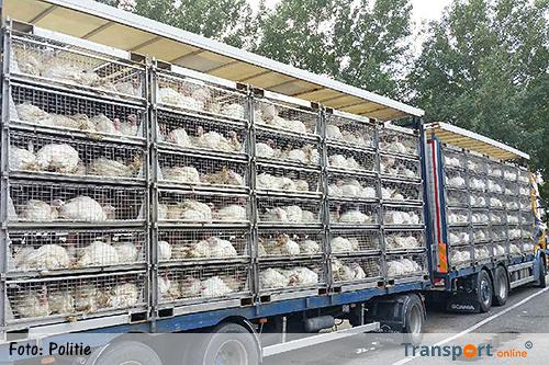 Vrachtwagen met kalkoenen gecontroleerd [+foto]