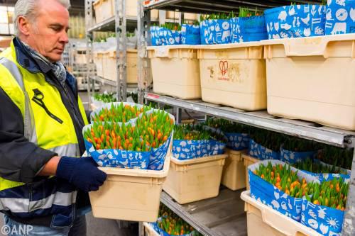Meer bloemen en planten de grens over