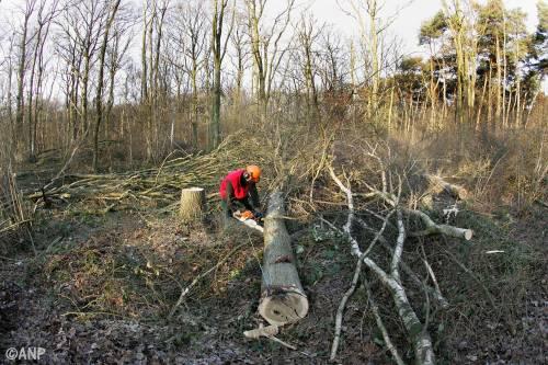 Staatsbosbeheer stopt particuliere bomenkap