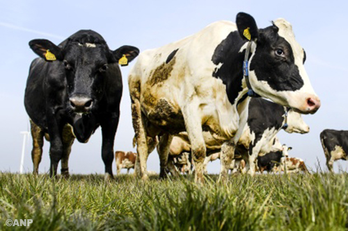 Fiat lidstaten voor soepele mestnorm Nederland