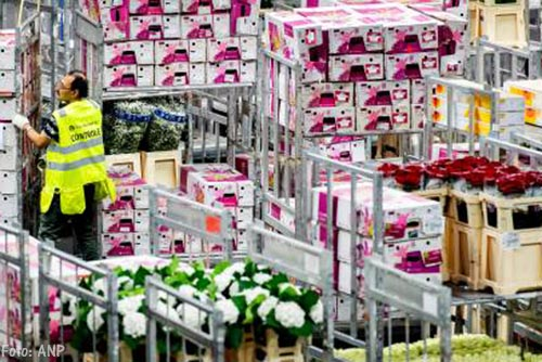 Export bloemen en planten blijft gelijk
