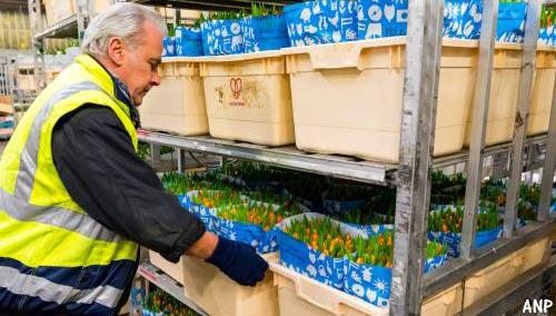 Exporteurs bloemen- en fruitsector bang voor chaos