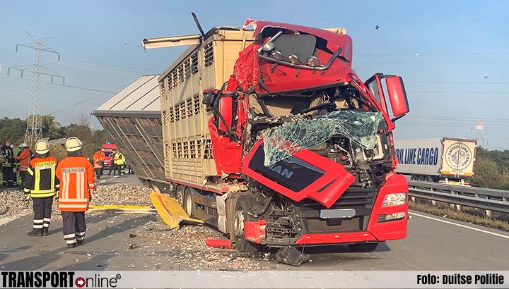 Vrachtwagen met varkens botst achterop andere vrachtwagen [+foto's]