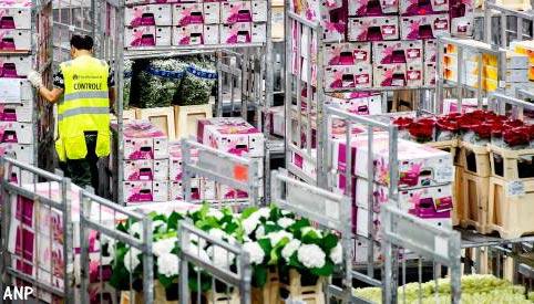 Bloemen- en plantenexport trekt aan