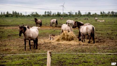 Spoedoverleg PS Flevoland over konikpaarden