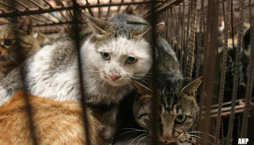 China wil opeten honden en katten verbieden