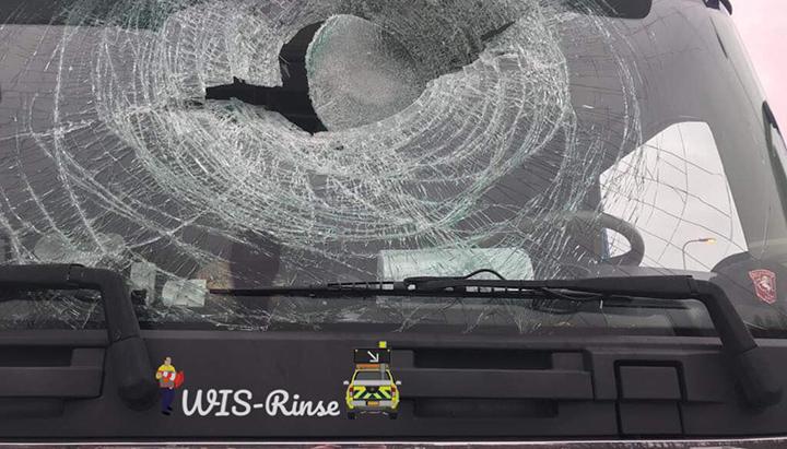 Vrachtwagenchauffeur krijgt zwaan door voorruit [+foto's]
