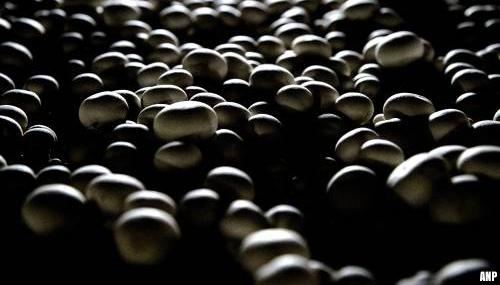 Greenyard verkoopt Nederlandse paddenstoelenverwerker