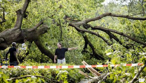 Duizenden bomen omgewaaid in bossen bij Leersum door noodweer