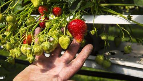 Glastuinbouw: groenten en bloemen wellicht duurder door hoge gasprijs