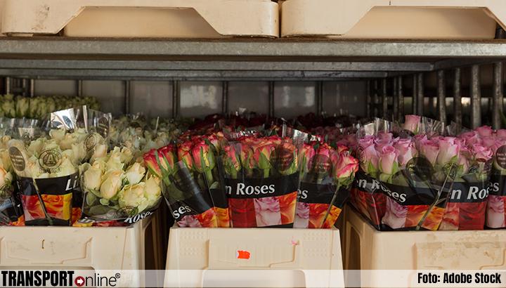 Floration Europe vordert via rechter verbod op import per zeevracht van rozen