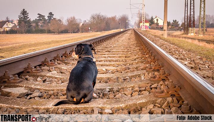 Incidenten met dieren op het spoor met tien procent gedaald