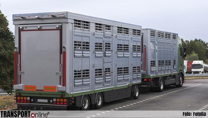 Tweede Kamer wil geen veetransport bij temperatuur boven de 30 graden