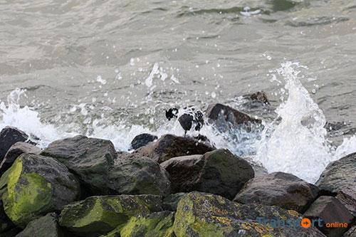 Rijkswaterstaat pakt kruising Hollandsch Diep met Dordtsche Kil aan