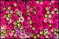 Export bloemen en planten gestegen